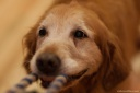 20130803dogs-002